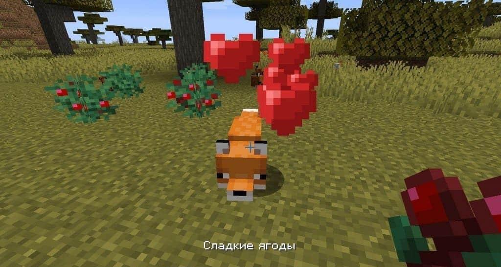 Кормим лису ягодами Майнкрафт
