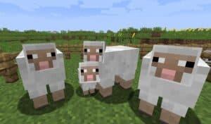 Овца в Майнкрафт гайд