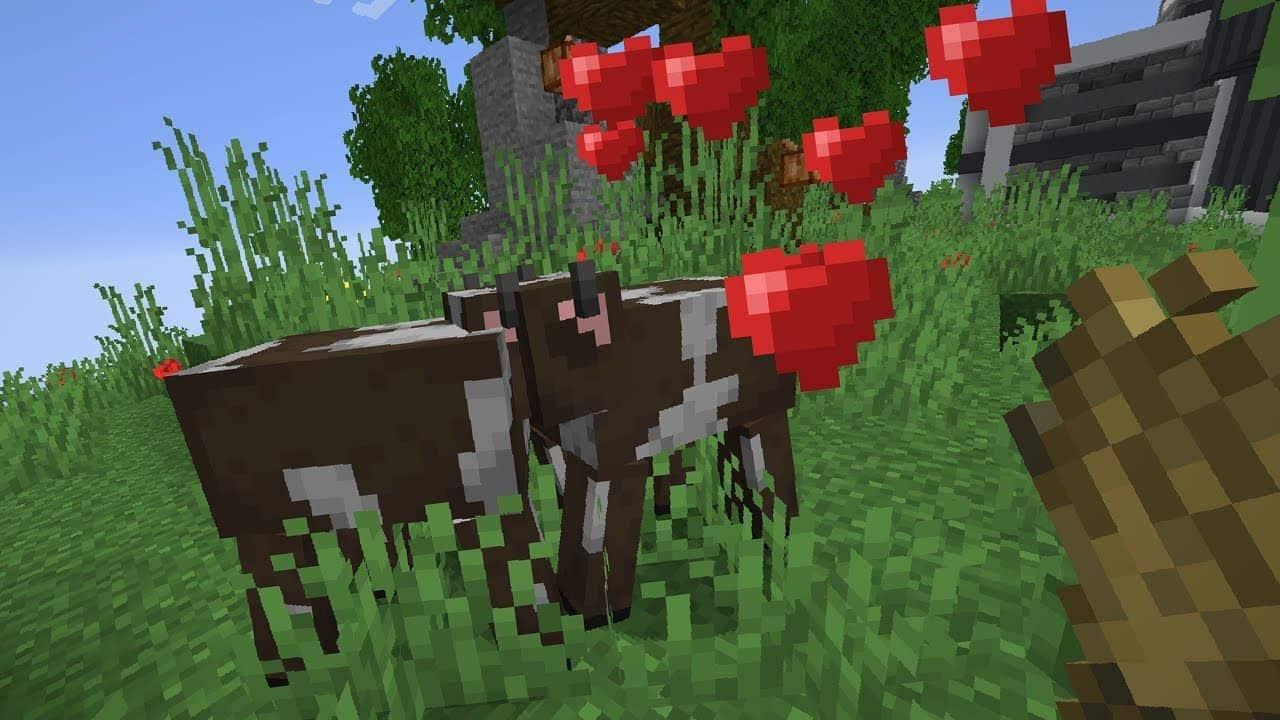 Коровы в игре майнкрафт советы