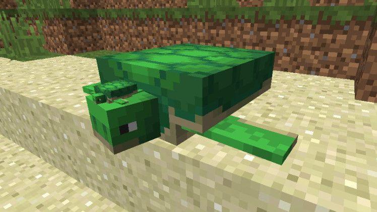 Черепаха в Майнкрафт: подробный гайд