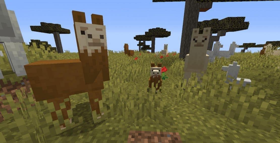 Как ведут себя ламы в игре Майнкрафт