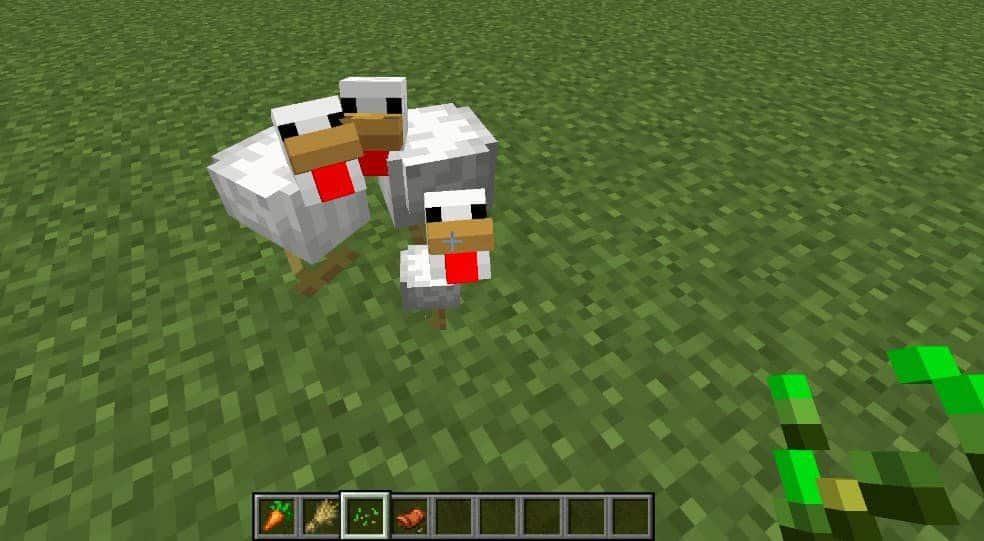Как разводить куриц в Майнкрафте